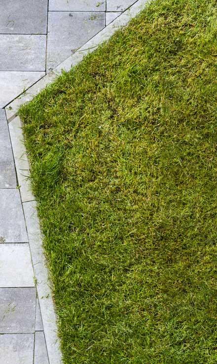 Gazal Landscaping Services, Inc. Lawn Dethatching