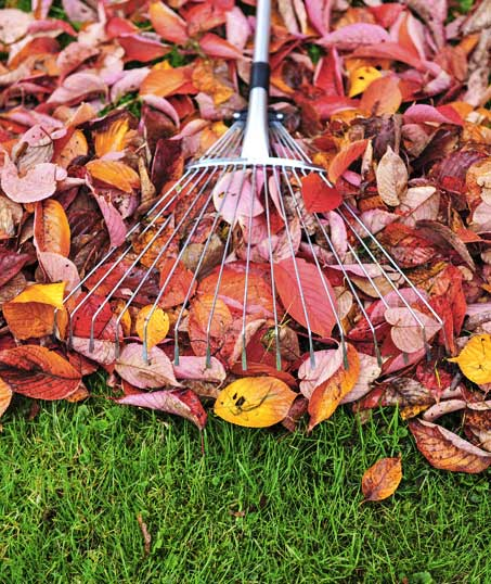 Gazal Landscaping Services, Inc. Fall Clean Up